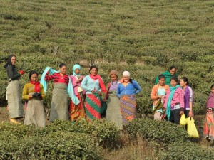 Frauen in Ilam, Ost-Nepal